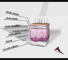 Sezione Derma 3D